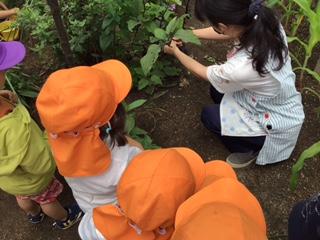 うみ2組 ナスとピーマンを収穫したよ!(2歳児クラス)